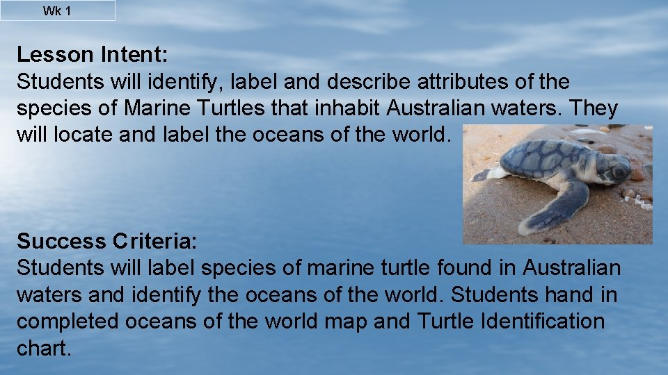 Wk 1 Lesson Intent: Students will identify, label and describe attributes of the species