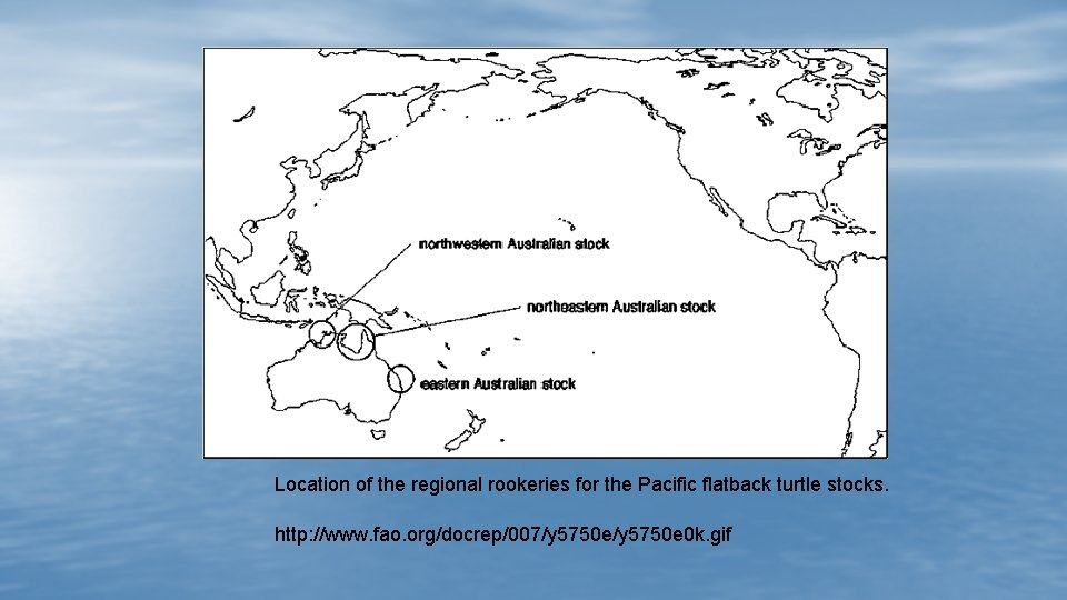 Location of the regional rookeries for the Pacific flatback turtle stocks. http: //www. fao.