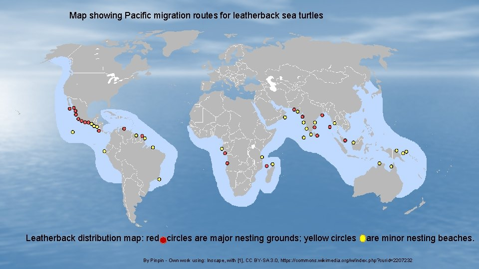 Map showing Pacific migration routes for leatherback sea turtles Leatherback distribution map: red circles