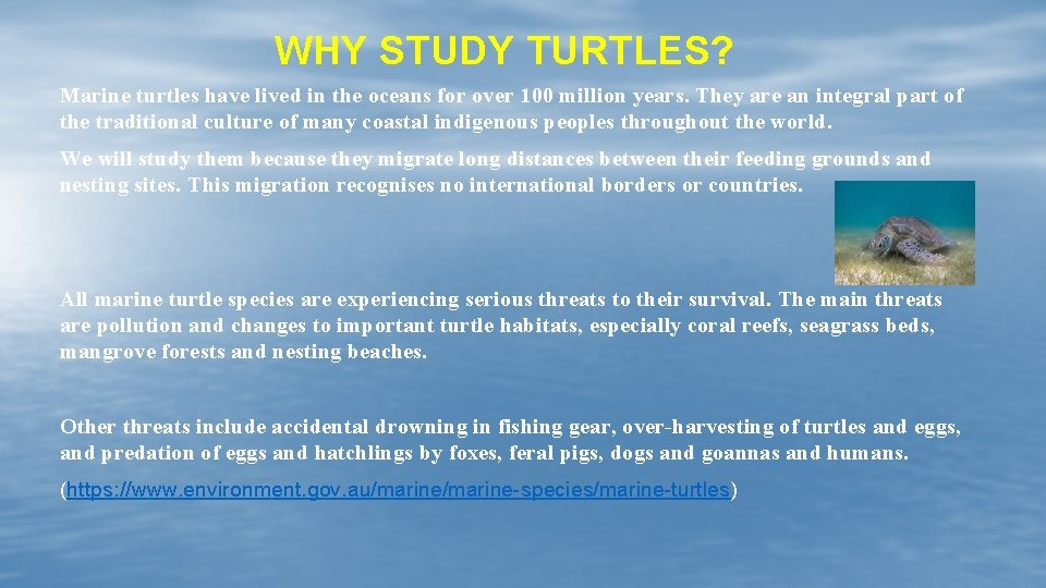 WHY STUDY TURTLES? Marine turtles have lived in the oceans for over 100 million