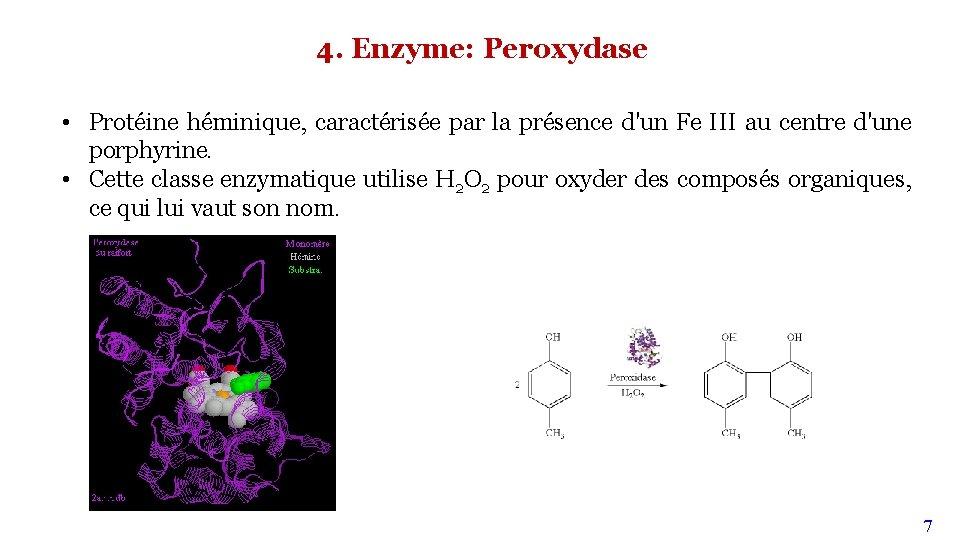 4. Enzyme: Peroxydase • Protéine héminique, caractérisée par la présence d'un Fe III au