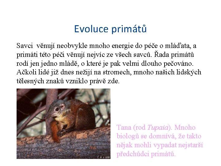 Evoluce primátů Savci věnují neobvykle mnoho energie do péče o mláďata, a primáti této