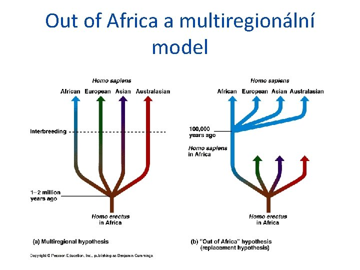 Out of Africa a multiregionální model