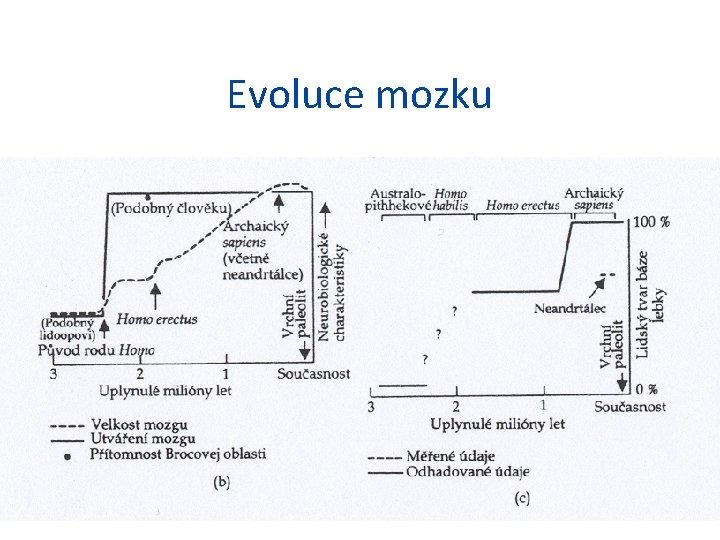 Evoluce mozku