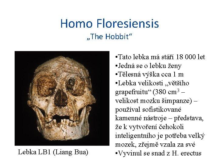 "Homo Floresiensis ""The Hobbit"" Lebka LB 1 (Liang Bua) • Tato lebka má stáří"