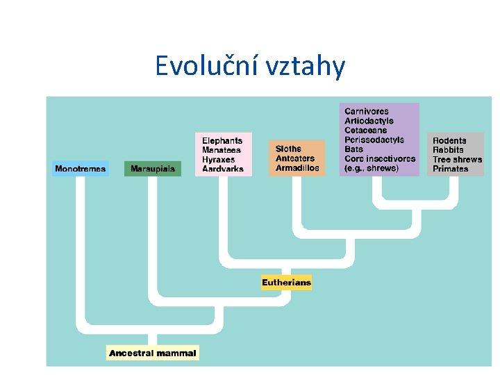 Evoluční vztahy
