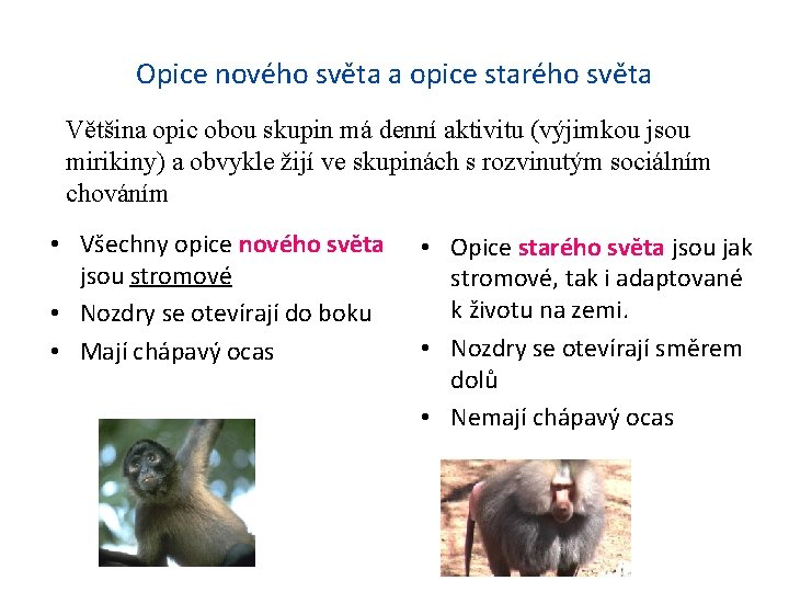 Opice nového světa a opice starého světa Většina opic obou skupin má denní aktivitu