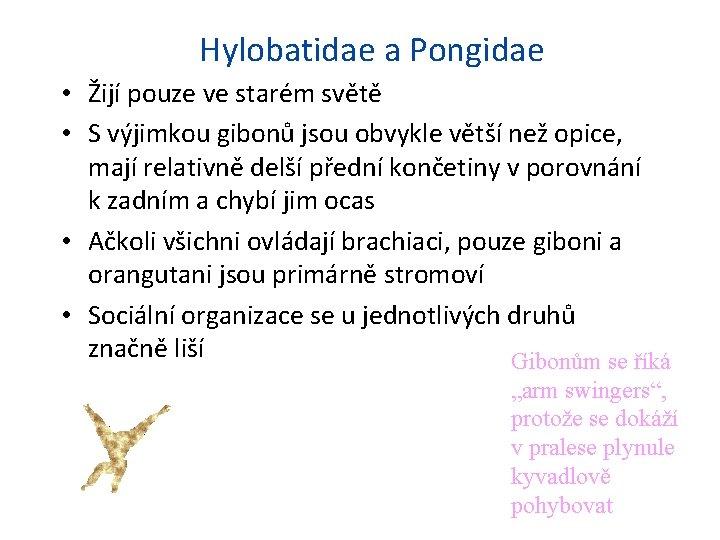 Hylobatidae a Pongidae • Žijí pouze ve starém světě • S výjimkou gibonů jsou