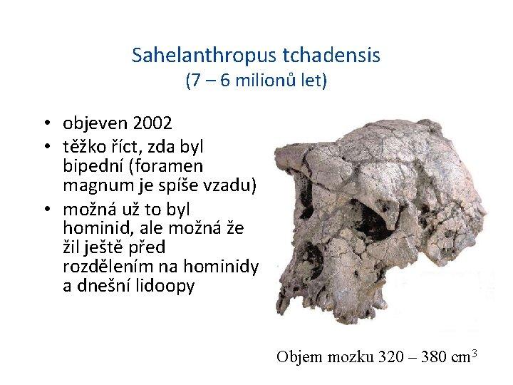 Sahelanthropus tchadensis (7 – 6 milionů let) • objeven 2002 • těžko říct, zda