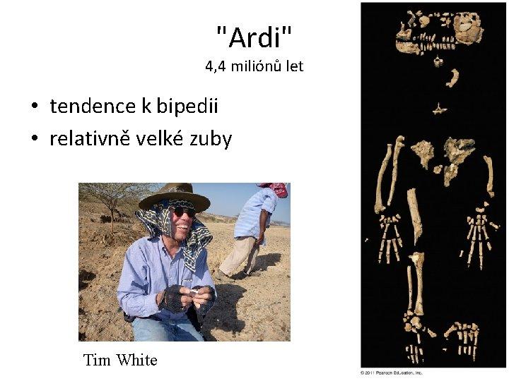 """""""Ardi"""" 4, 4 miliónů let • tendence k bipedii • relativně velké zuby Tim"""