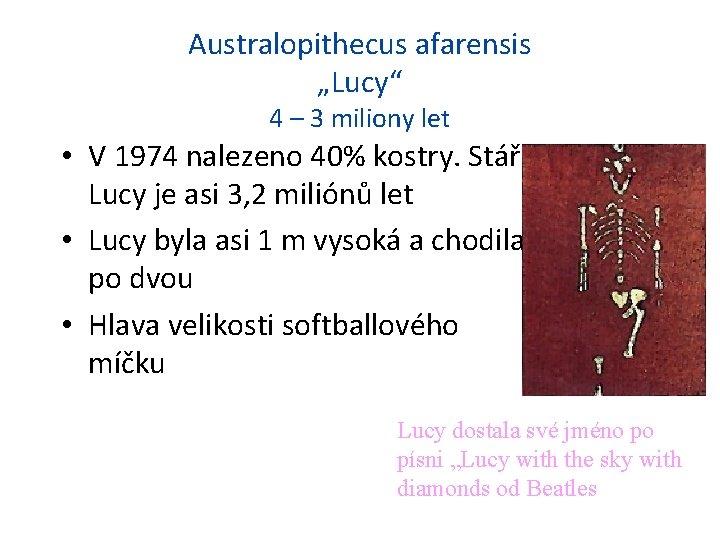 "Australopithecus afarensis ""Lucy"" 4 – 3 miliony let • V 1974 nalezeno 40% kostry."
