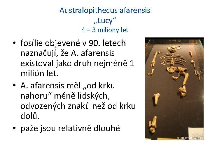 """Australopithecus afarensis """"Lucy"""" 4 – 3 miliony let • fosílie objevené v 90. letech"""