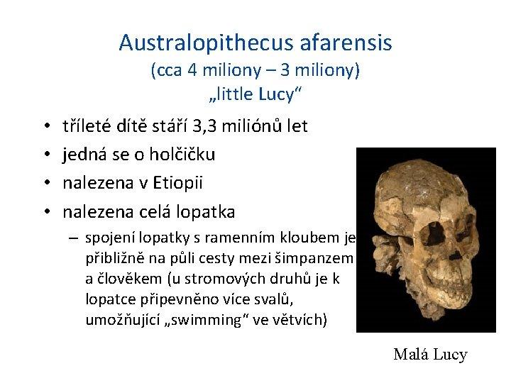 """Australopithecus afarensis (cca 4 miliony – 3 miliony) """"little Lucy"""" • • tříleté dítě"""