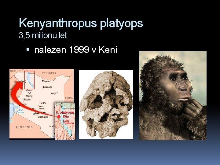 Kenyanthropus platyops 3, 5 milionů let nalezen 1999 v Keni
