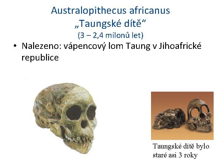 """Australopithecus africanus """"Taungské dítě"""" (3 – 2, 4 milonů let) • Nalezeno: vápencový lom"""