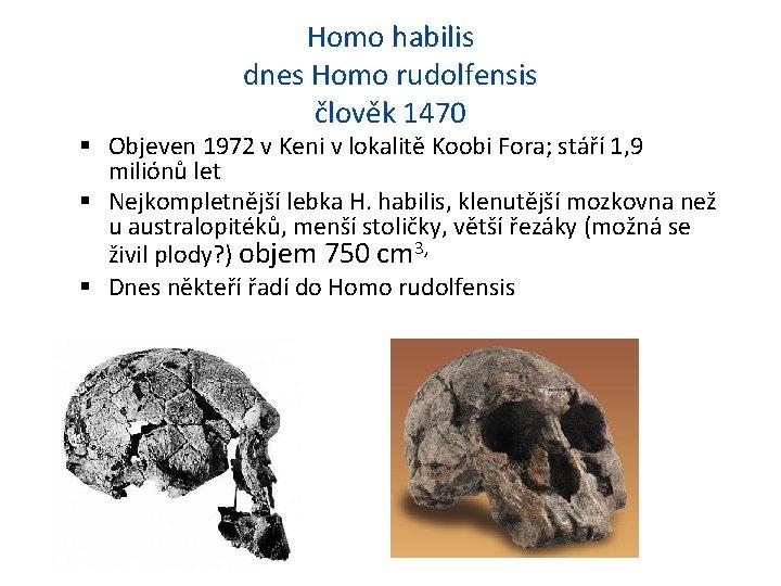 Homo habilis dnes Homo rudolfensis člověk 1470 Objeven 1972 v Keni v lokalitě Koobi