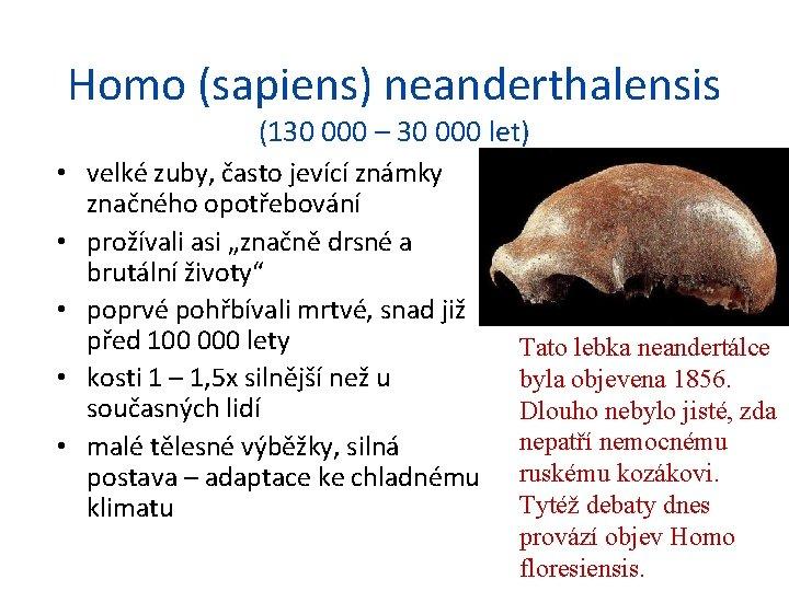 Homo (sapiens) neanderthalensis (130 000 – 30 000 let) • velké zuby, často jevící