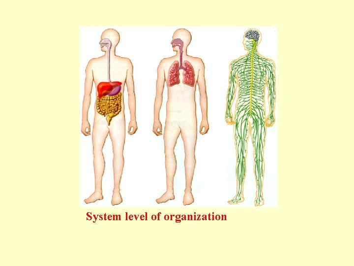System level of organization