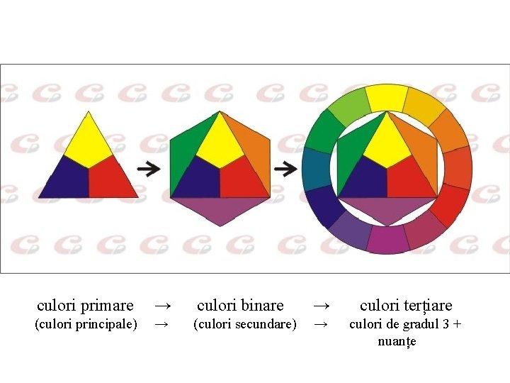 culori primare → culori binare → culori terțiare (culori principale) → (culori secundare) →