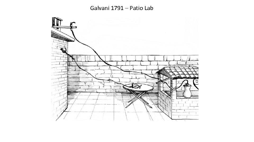 Galvani 1791 – Patio Lab