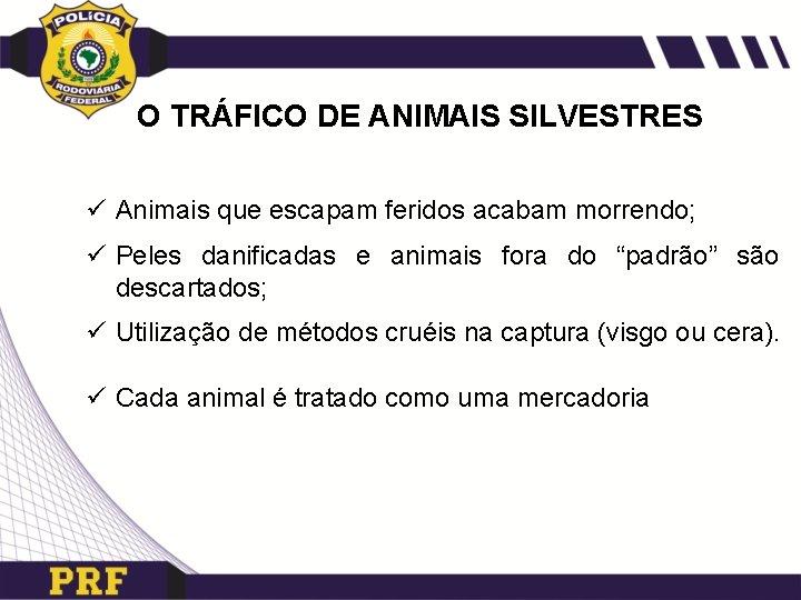 O TRÁFICO DE ANIMAIS SILVESTRES ü Animais que escapam feridos acabam morrendo; ü Peles