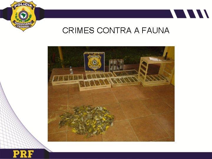 CRIMES CONTRA A FAUNA