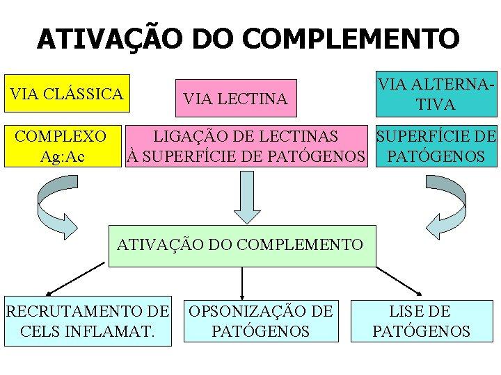 ATIVAÇÃO DO COMPLEMENTO VIA CLÁSSICA COMPLEXO Ag: Ac VIA LECTINA VIA ALTERNATIVA LIGAÇÃO DE