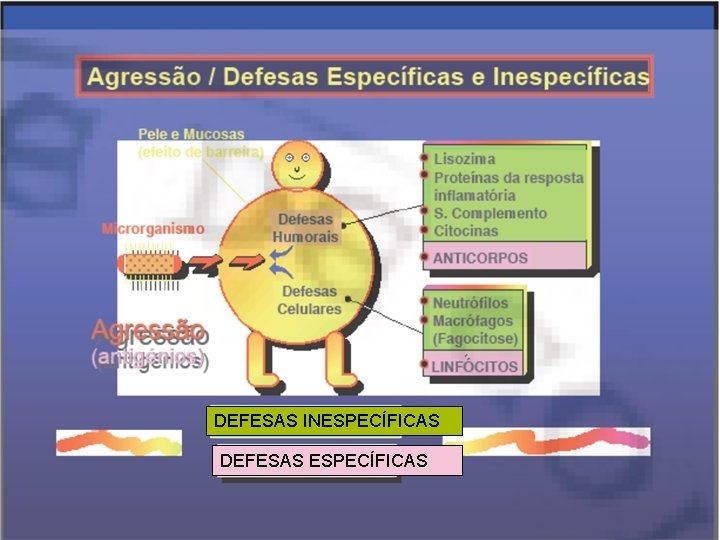 DEFESAS INESPECÍFICAS DEFESAS ESPECÍFICAS