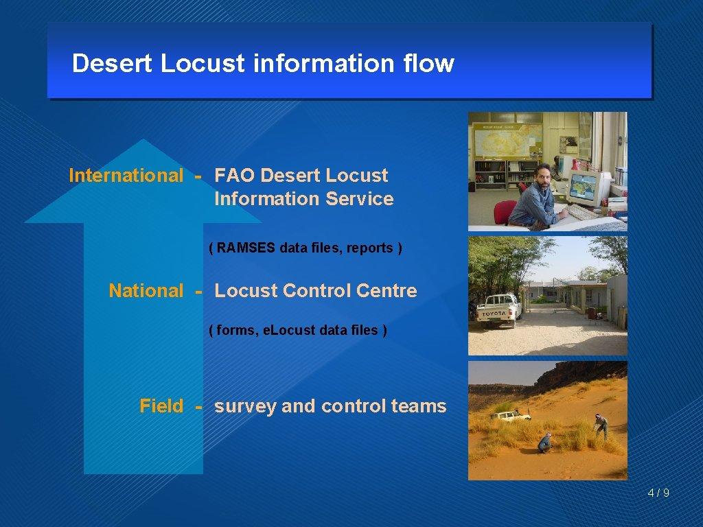 Desert Locust information flow International - FAO Desert Locust Information Service ( RAMSES data
