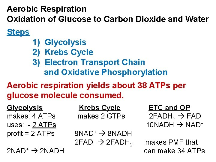Aerobic Respiration Oxidation of Glucose to Carbon Dioxide and Water Steps 1) Glycolysis 2)