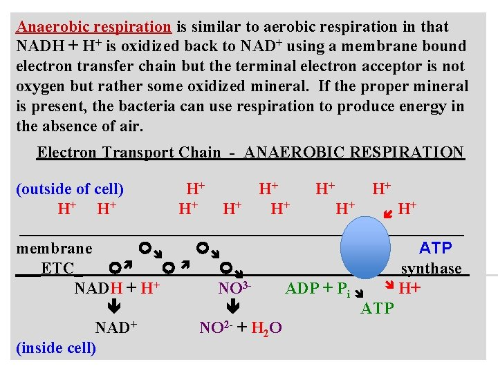 Anaerobic respiration is similar to aerobic respiration in that NADH + H+ is oxidized