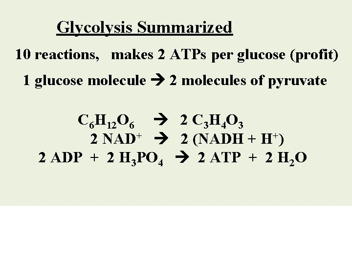 Glycolysis Summarized 10 reactions, makes 2 ATPs per glucose (profit) 1 glucose molecule