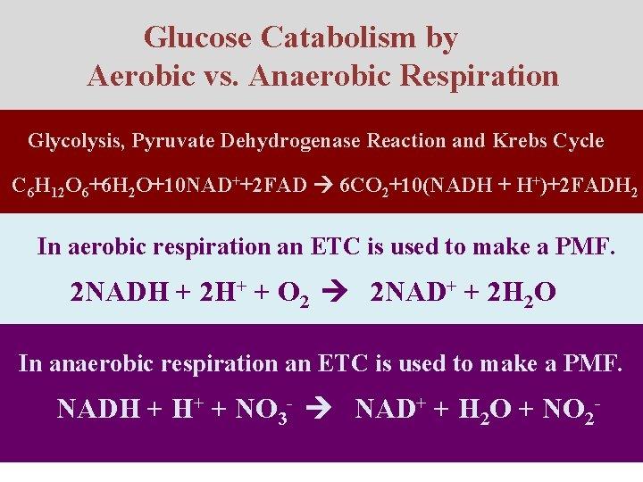 Glucose Catabolism by Aerobic vs. Anaerobic Respiration Glycolysis, Pyruvate Dehydrogenase Reaction and Krebs