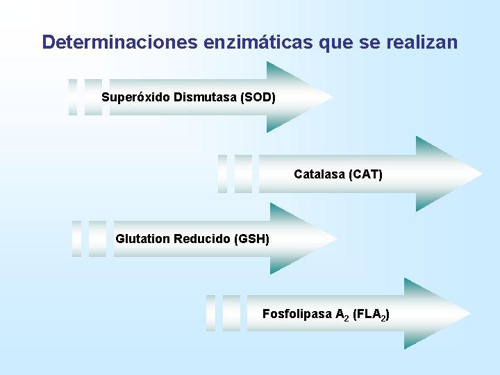Determinaciones enzimáticas que se realizan Superóxido Dismutasa (SOD) Catalasa (CAT) Glutation Reducido (GSH) Fosfolipasa