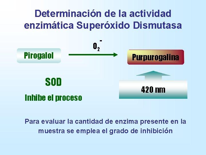 Determinación de la actividad enzimática Superóxido Dismutasa Pirogalol SOD Inhibe el proceso O 2
