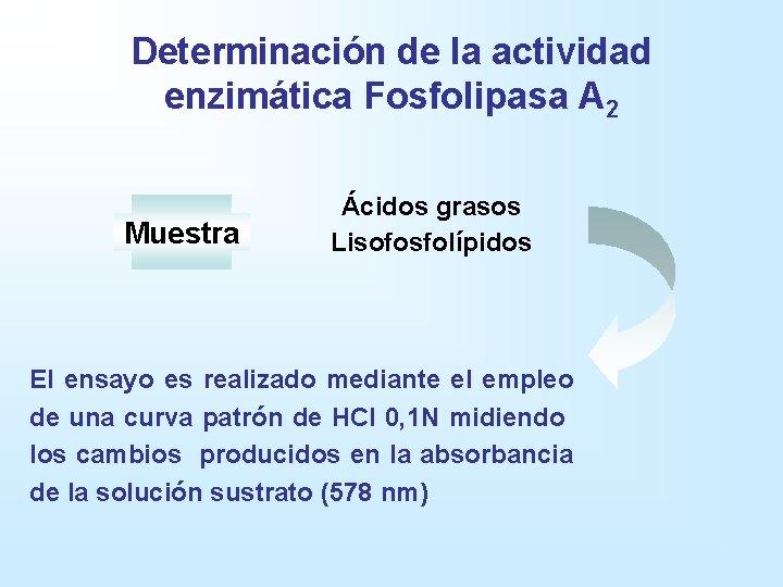 Determinación de la actividad enzimática Fosfolipasa A 2 Muestra Ácidos grasos Lisofosfolípidos El ensayo