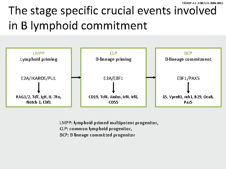 TÁMOP-4. 1. 2 -08/1/A-2009 -0011 The stage specific crucial events involved in B lymphoid