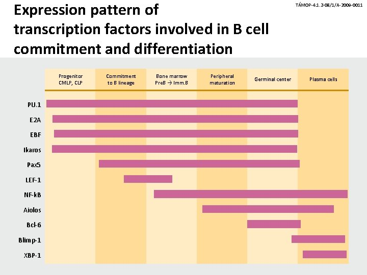 Expression pattern of transcription factors involved in B cell commitment and differentiation Progenitor CMLP,
