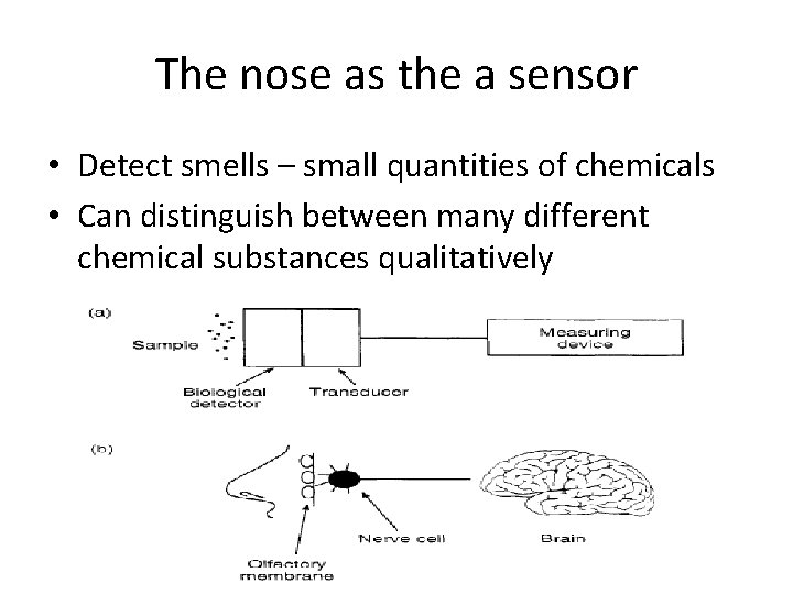 The nose as the a sensor • Detect smells – small quantities of chemicals