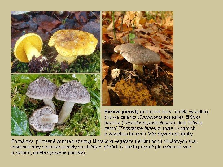 Borové porosty (přirozené bory i umělá výsadba): čirůvka zelánka (Tricholoma equestre), čirůvka havelka (Tricholoma