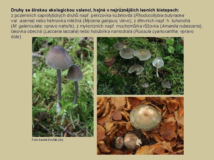Druhy se širokou ekologickou valencí, hojné v nejrůznějších lesních biotopech: z pozemních saprofytických druhů