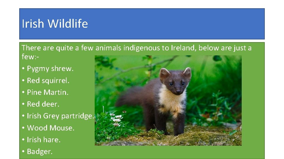 Irish Wildlife There are quite a few animals indigenous to Ireland, below are just
