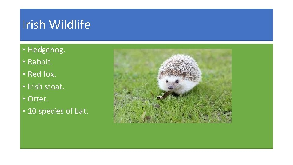 Irish Wildlife • Hedgehog. • Rabbit. • Red fox. • Irish stoat. • Otter.