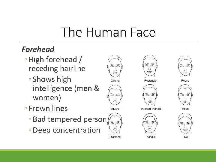 The Human Face Forehead ◦ High forehead / receding hairline ◦ Shows high intelligence