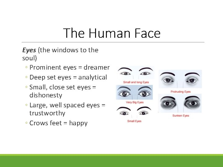 The Human Face Eyes (the windows to the soul) ◦ Prominent eyes = dreamer