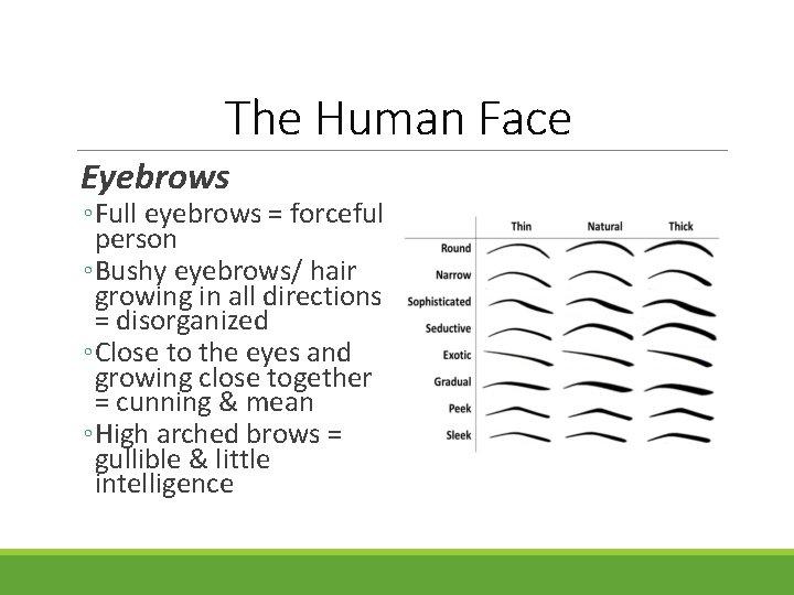 The Human Face Eyebrows ◦ Full eyebrows = forceful person ◦ Bushy eyebrows/ hair