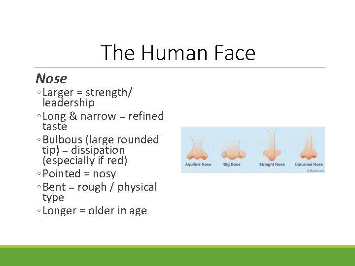 The Human Face Nose ◦ Larger = strength/ leadership ◦ Long & narrow =