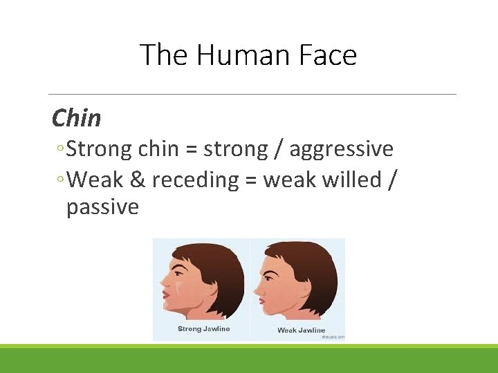 The Human Face Chin ◦ Strong chin = strong / aggressive ◦ Weak &