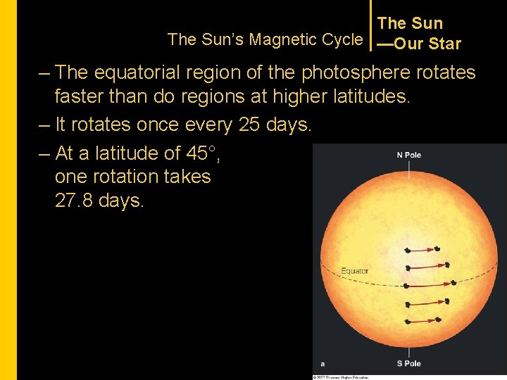 The Sun's Magnetic Cycle —Our Star – The equatorial region of the photosphere rotates