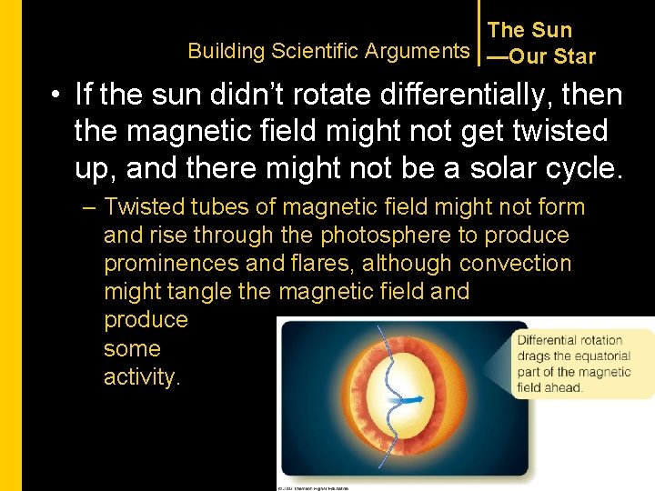 The Sun Building Scientific Arguments —Our Star • If the sun didn't rotate differentially,